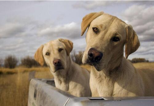 狗狗老瞭會有什麼跡象 照顧老年狗狗要註意這些!