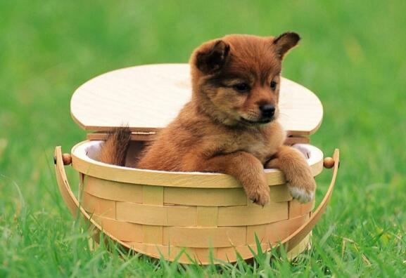 狗狗能吃蛋黃嗎 原來狗狗吃蛋黃好處這麼多