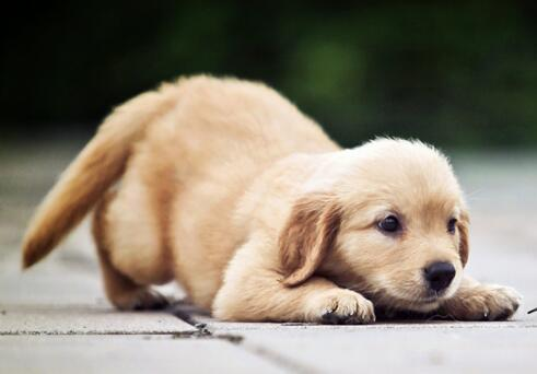 狗狗能喝牛奶嗎 狗狗飲食還是有講究的!