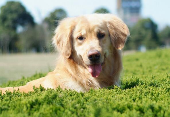 狗狗打嗝怎麼回事 快看看你的愛犬是屬於哪種