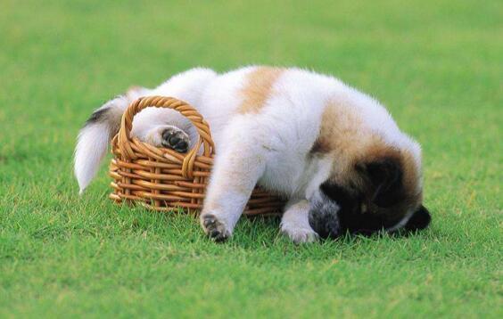 狗狗睡覺磨牙是為什麼 鏟屎官要這麼做才對