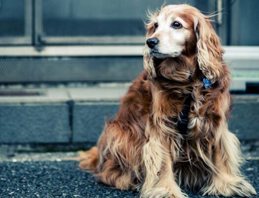 狗狗不吃狗糧怎麼辦 你可以試試這4招!