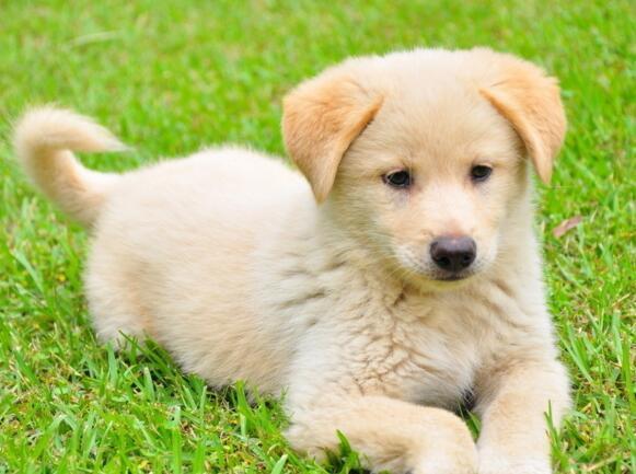 狗狗為什麼喜歡舔人 並不隻是因為喜歡你