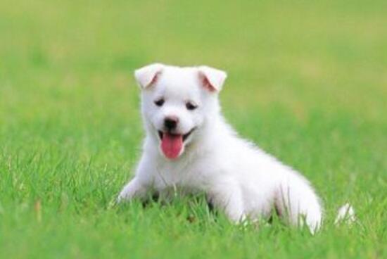 狗狗吃草是什麼原因 鏟屎官們都知道嗎?