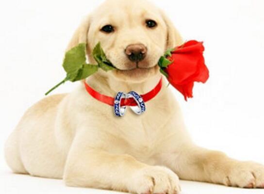 狗狗什麼時候打疫苗 要打幾次疫苗呢?