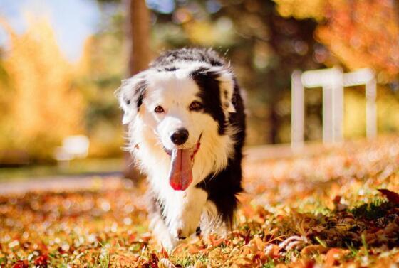 狗狗換毛期什麼癥狀 換毛期間要註意些什麼