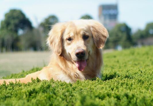 狗狗掉毛嚴重是什麼原因 7大原因你都清楚嗎