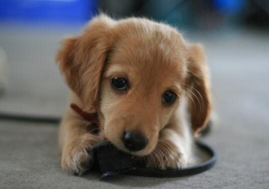 狗狗有眼屎是什麼原因 眼屎突然增多一定要註意