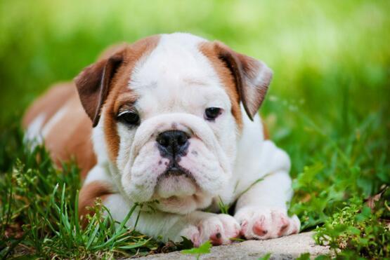 狗狗有蟎蟲怎麼辦 會有哪些癥狀表現?