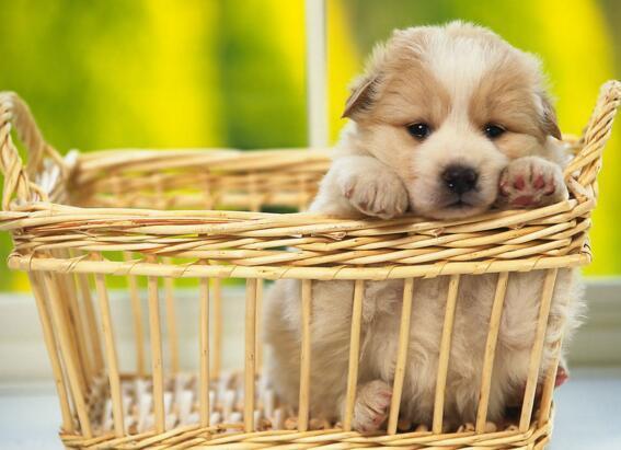 狗狗不吃東西怎麼辦 生理性的無需太擔心