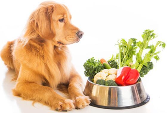 狗狗一天吃幾頓比較好 根據年齡段來看