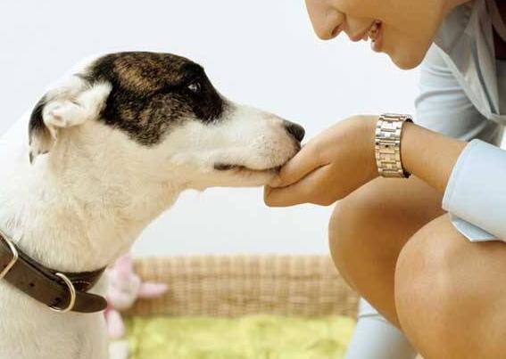 狗狗為什麼不能吃葡萄 不能吃的食物有哪些呢?