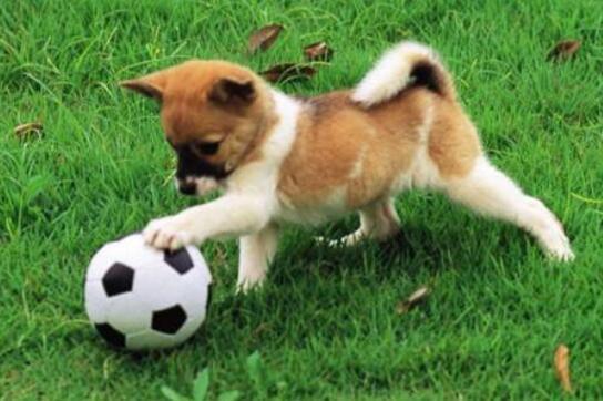狗狗不舒服有哪些癥狀 這些表現可能預示健康有問題