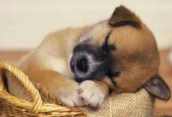 狗狗愛你的表現 快看看它們都有哪些形式表達愛意吧!