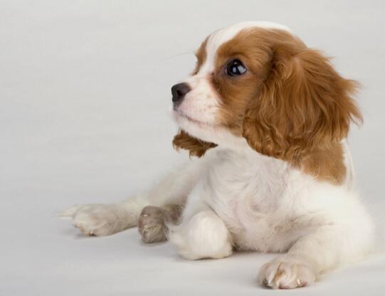 狗狗吃蛋黃有什麼好處 喂食時要註意這些問題