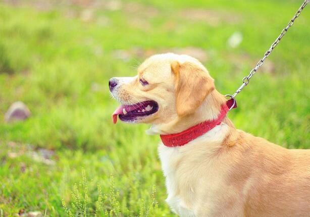 狗狗吃骨頭的好處 註意有些骨頭狗狗可不能吃
