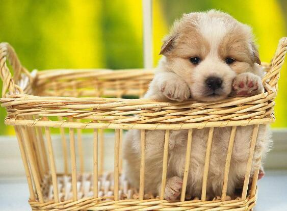 怎麼給狗狗剪指甲 為什麼要給狗狗剪指甲呢