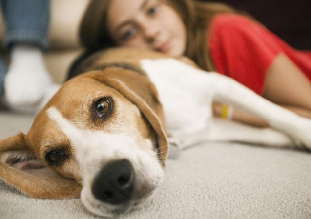 如何防止狗狗咬傢具 出現這種情況不要一味訓斥