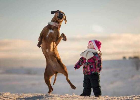 狗狗懷孕有什麼反應 要精心照顧好狗媽媽哦!