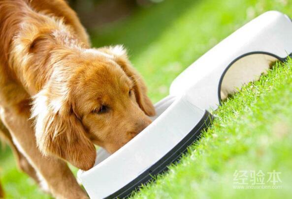 狗狗吃瞭巧克力怎麼辦 為什麼狗狗不能吃巧克力