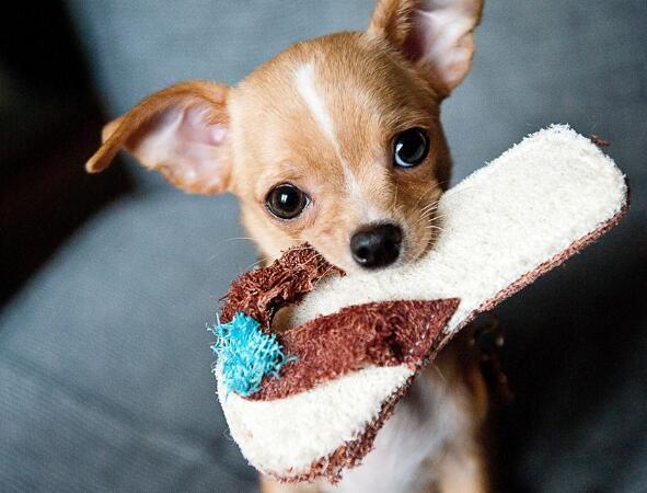 狗狗嘔吐是怎麼回事 要怎麼進行診斷?