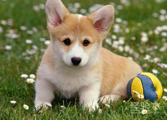 狗狗打嗝是什麼聲音