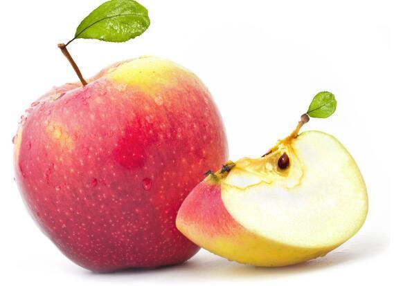 柴犬可以吃蘋果嗎 註意掌握科學喂食方法