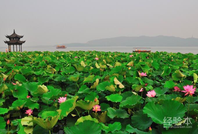 去杭州西湖旅游攻略_杭州西湖荷花几月份开 去这几个地方赏荷最好不过了-旅游经验本