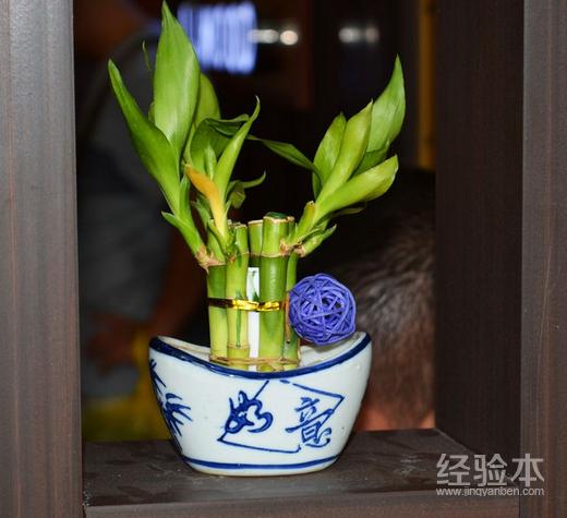 水养繁华竹叶子发黄怎么办 10招轻松救治繁华竹叶子发黄
