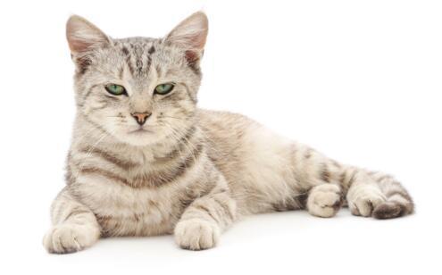 男子被貓抓傷沒在意數月後死亡 別大意!看看被貓抓傷怎麼處理