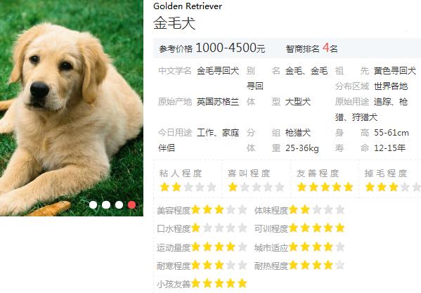 第一次養狗養什麼狗 新手養狗就得挑這10種狗狗!