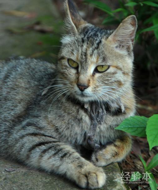 第一次養貓養什麼品種 熱門好養的10種貓最適合新手!