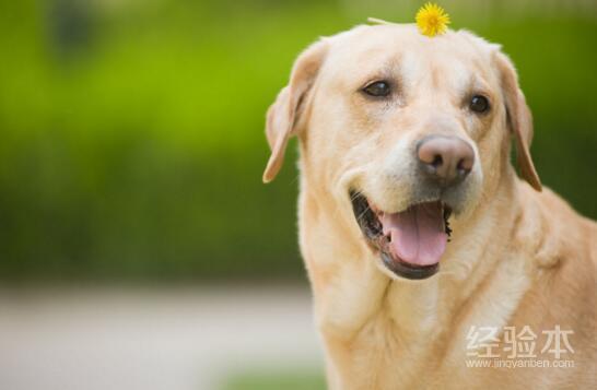 怎麼防止狗狗掉毛 減少愛狗掉毛?這些小妙招要知道!