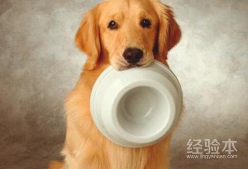 狗狗不吃狗糧怎麼辦 不用急!這樣它就會愛吃瞭...