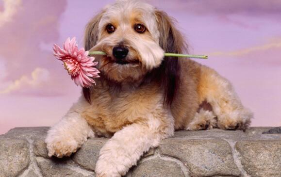 狗狗能吃的人類食物 這些食物可以和愛狗共享!