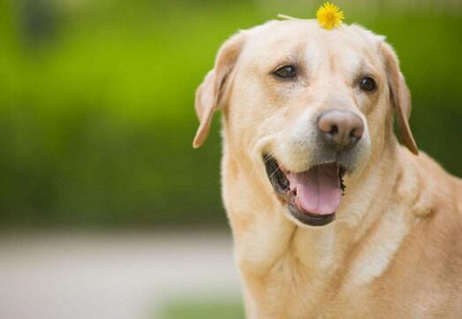怎樣預防狗狗得皮膚病 小心:這些因素都會引發皮膚病!