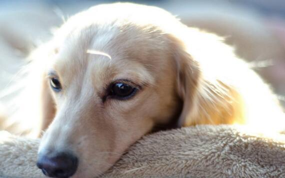 狗狗吃什麼對腸胃好 這三種食物可以適當給愛狗食用!