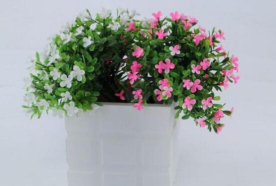 植物為什麼養不活 那是因為你沒有做好這11點養花細節...