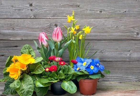 小蘇打可以養花嗎 原來它有這麼多好處,趕緊用起來...