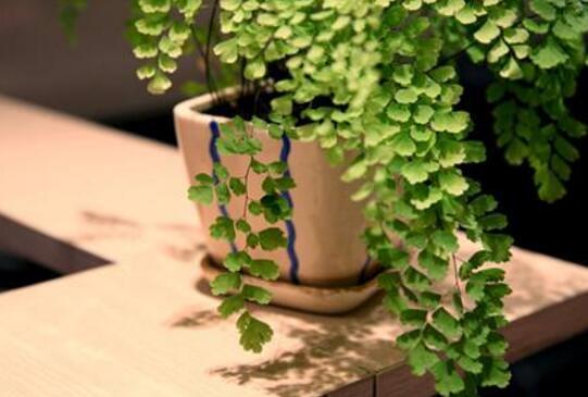 怎麼讓植物快速生根 5種生根方法快學起來!