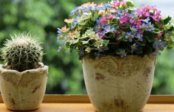 植物病害的癥狀類型 想知道自己養的花有什麼問題趕緊來看看!