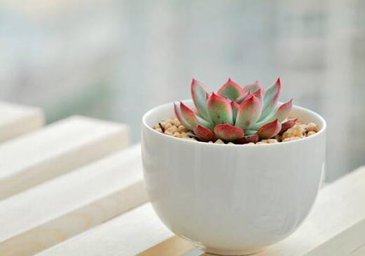 老人養什麼花好 這4種花卉老年人養健康長壽又養心!