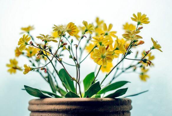 如何讓植物快速生根 試試這6種水讓花兒根長更好!