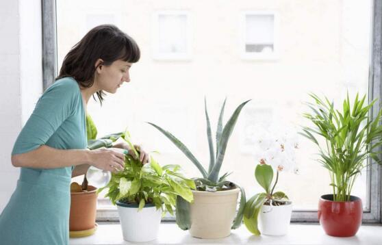 養花怎麼澆水 養花新手、老手必知!