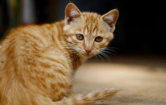 貓咪飲食註意事項 這些食物可不能給貓咪吃!
