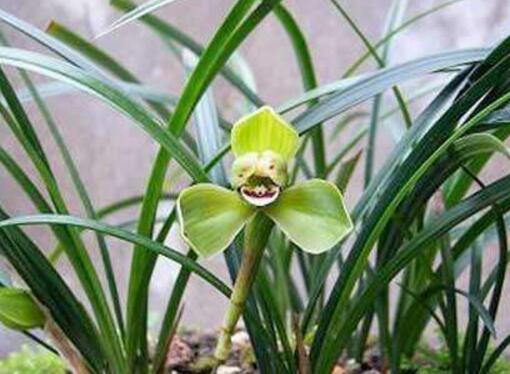 冬天養花怎麼才能養好 掌握這些技巧你的愛花才能安全過冬!