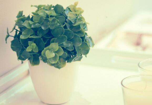 養盆栽什麼肥料最好 加點這個花兒蹭蹭的長!