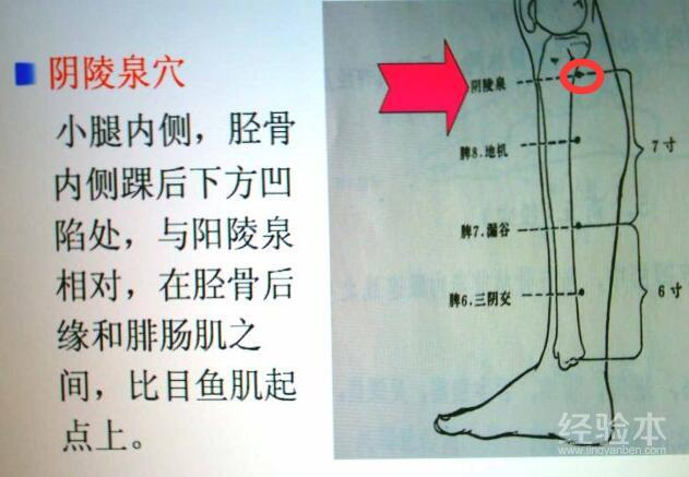 五行健康舞_阴陵泉的准确位置图,阴陵泉在什么位置-健康经验本