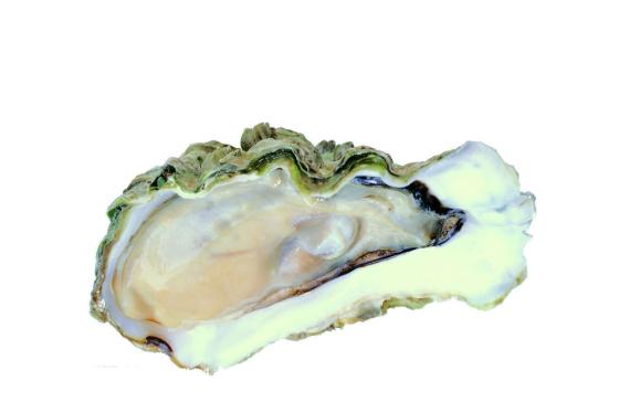 牡蛎的营养价值
