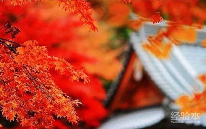 11月去日本旅游有什么好玩的